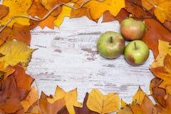 Färgrik och ljus höstlig bakgrund, höstsidor, på en sjaskig vit träbakgrund med gröna tre och röda äpplen autum arkivbilder