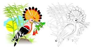 Färgrik och svartvit sida för färgläggningboken för ungar Fantasiillustration av den gulliga hoopoen med ljust befjädra stock illustrationer