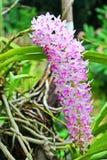 Färgrik orkidé i Thailand Arkivfoto