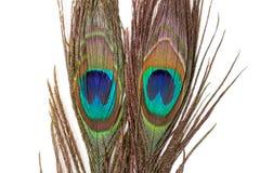 Färgrik påfågelfjäder Fotografering för Bildbyråer