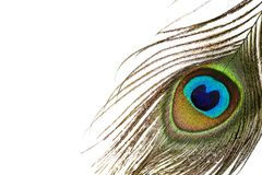 Färgrik påfågelfjäder, slut upp Fotografering för Bildbyråer
