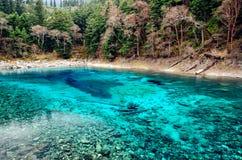 Färgrik pöl i den Jiuzhaigou nationalparken, Sichuan Kina Royaltyfria Bilder