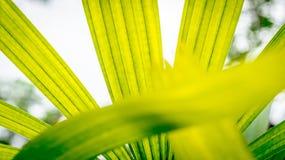 Färgrik palmblad Arkivfoto
