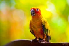 Färgrik papegoja arkivbilder