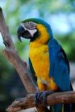 färgrik papegoja Royaltyfri Fotografi