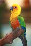 Färgrik papegoja Fotografering för Bildbyråer