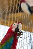 Färgrik papegoja i bur i zoo Fotografering för Bildbyråer