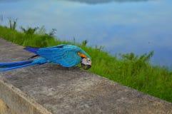 Färgrik papegoja i Thail Royaltyfri Foto