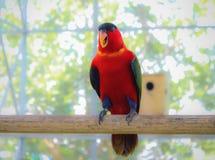 Färgrik papegoja som vilar sikt för ona-pinnesida royaltyfri bild