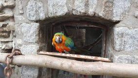 Färgrik papegojafågel Arkivbild