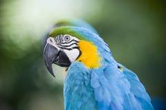 färgrik papegojastående Arkivbild