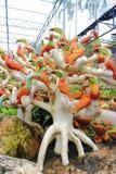 Färgrik papegojastaty Royaltyfria Bilder