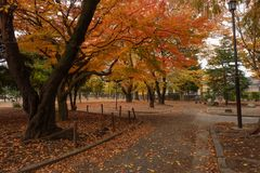 färgrik park för höst Arkivfoto
