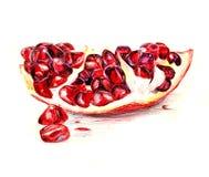 färgrik pomegranate Arkivbilder