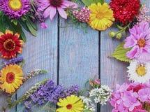 Färgrik ram av nya sommarblommor Arkivbild