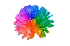 Färgrik regnbågeblommabakgrund arkivbilder
