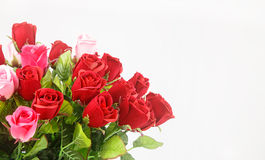 Färgrik ros mot vit bakgrund Fotografering för Bildbyråer