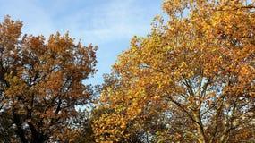 Färgrik säsongändring i höst royaltyfri fotografi