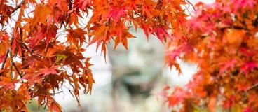 Färgrik säsong i Kamakura Japan Royaltyfri Bild