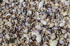 Färgrik samling av snäckskal som mattar stranden i Ao Nang, Thailand Royaltyfria Foton