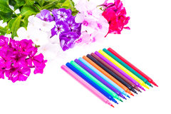 Färgrik sammansättning med blommor och färgade blyertspennor Lekmanna- nolla för lägenhet Royaltyfria Foton