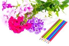 Färgrik sammansättning med blommor och färgade blyertspennor Lekmanna- nolla för lägenhet Arkivfoto
