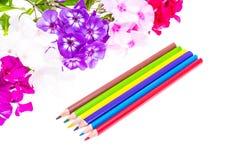 Färgrik sammansättning med blommor och färgade blyertspennor Lekmanna- nolla för lägenhet Royaltyfri Foto