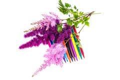 Färgrik sammansättning med blommor och färgade blyertspennor Lekmanna- nolla för lägenhet Arkivbilder