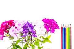 Färgrik sammansättning med blommor och färgade blyertspennor Lekmanna- nolla för lägenhet Arkivfoton