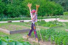 färgrik scarecrow royaltyfria bilder
