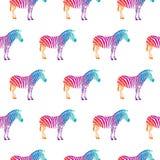 färgrik sebra vektor illustrationer