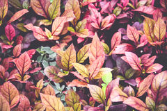 Färgrik sidabakgrund för tappning Royaltyfria Foton