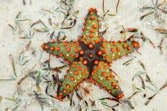 färgrik sjöstjärna Arkivbild