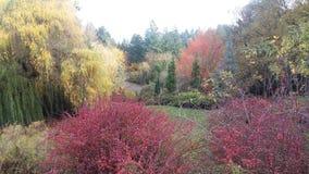 Färgrik skog Fotografering för Bildbyråer