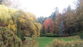 Färgrik skog Royaltyfri Bild