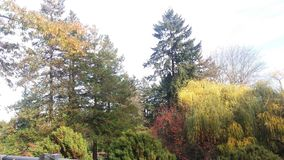 Färgrik skog Royaltyfri Fotografi