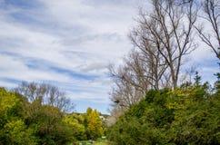Färgrik skog för höst Arkivbild
