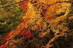 färgrik skog för höst Royaltyfria Bilder