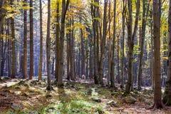 Färgrik skog för höst med underbart solsken Arkivfoto