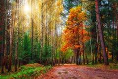 Färgrik skog för höst på solig dag scenisk skog i nedgång Landskap av höstgulingträd Arkivfoto