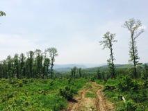 Färgrik skog från låg ängel Fotografering för Bildbyråer