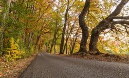 Färgrik skog på hösten Royaltyfri Foto