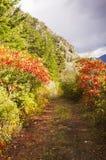 Färgrik skoggränd Royaltyfria Bilder