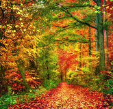 Färgrik skogplats i höst arkivbild