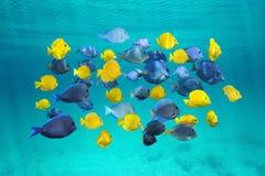 Färgrik skola av den tropiska fisken nedanför yttersida Arkivfoto