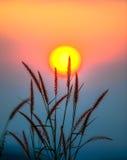 Färgrik sol med gräs royaltyfria foton