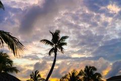 Färgrik solnedgång över havsstranden med palmtreekonturn Arkivbild