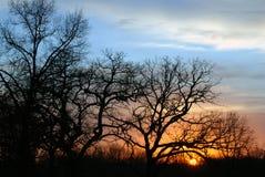 färgrik solnedgång Royaltyfri Foto