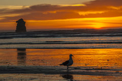 Färgrik solnedgång med fiskmåsen Arkivbild
