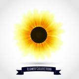 Färgrik solros som isoleras på vit stock illustrationer